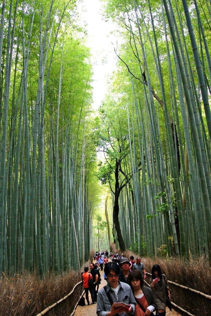 arashiyama bosque de bambú