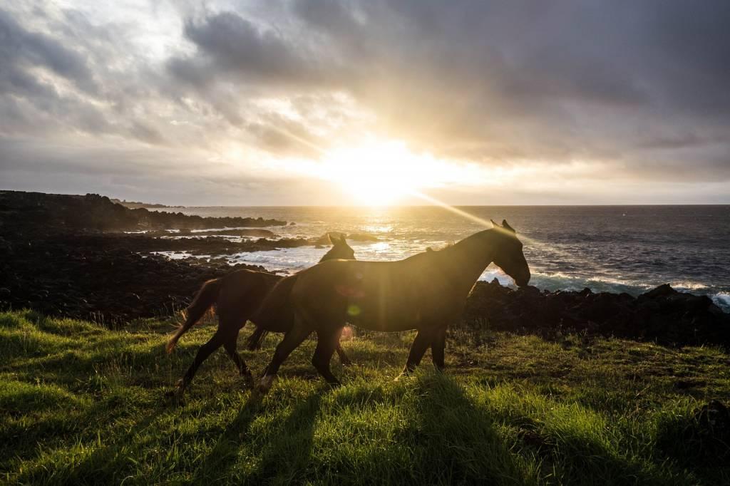 caballos isla de pascua