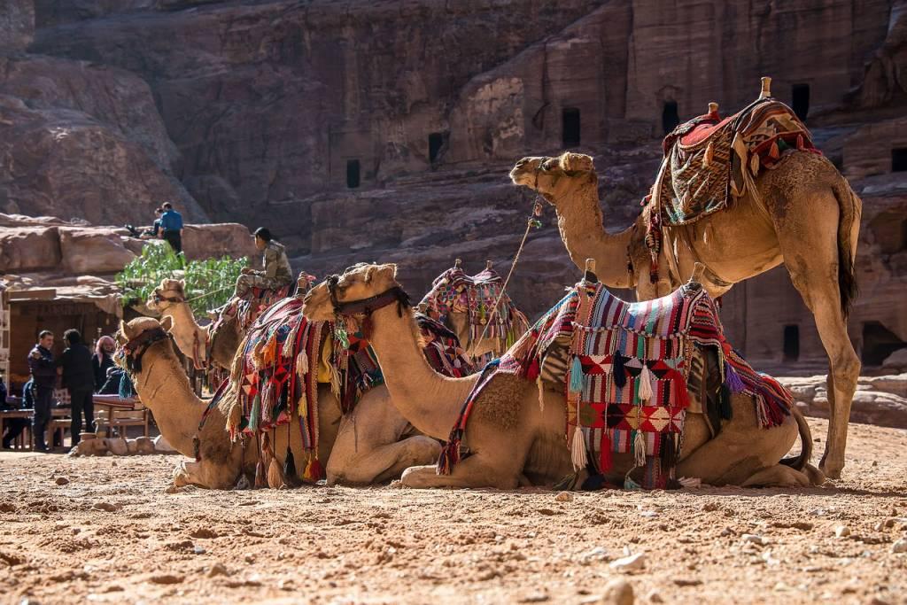 camello petra