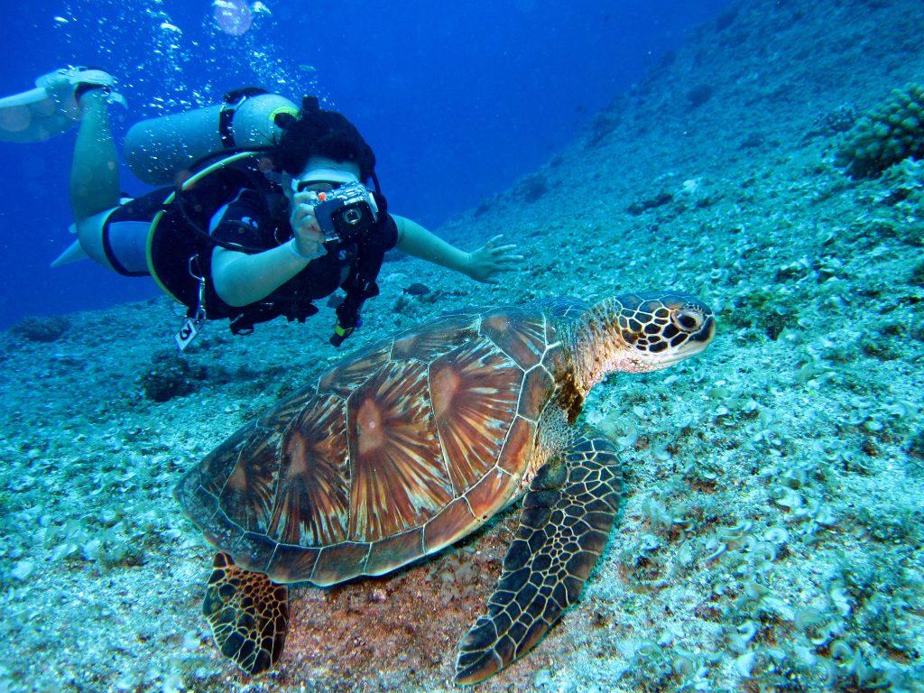 Submarinismo gran barrera coral