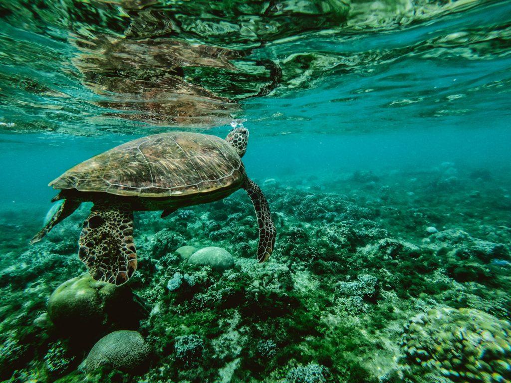 Tortuga gigante - Barrera de coral