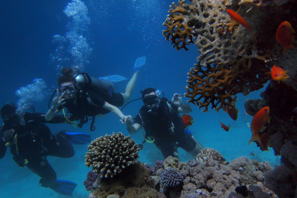 submarinismo gran barrera de coral