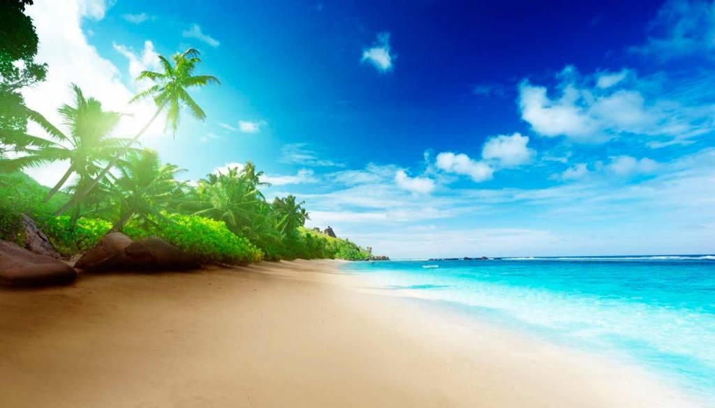 palmeras seychelles