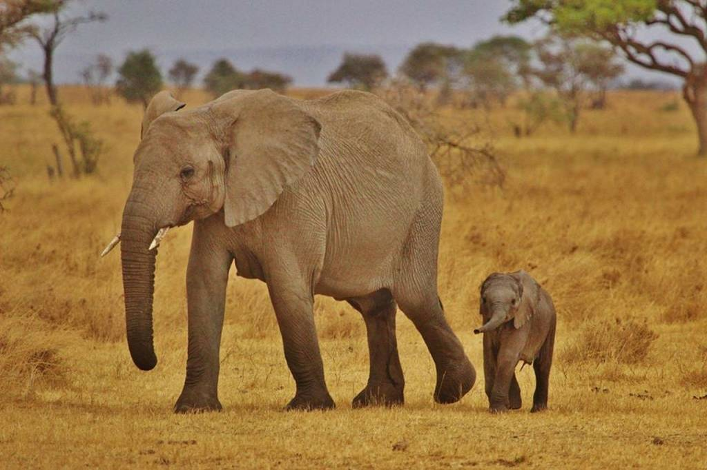 elefantes serengeti