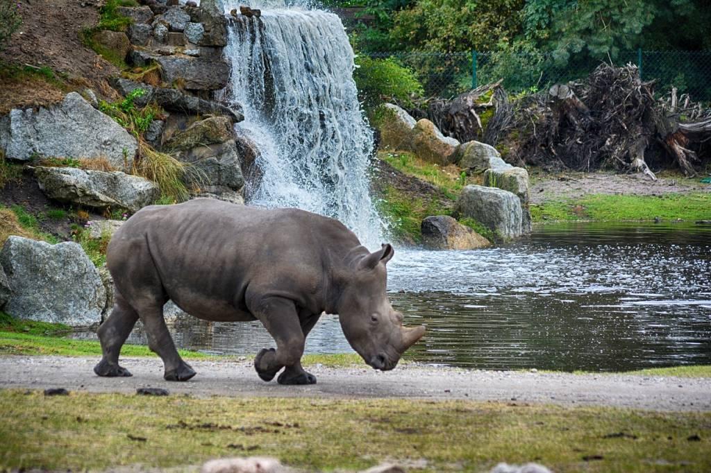serengeti rinoceronte