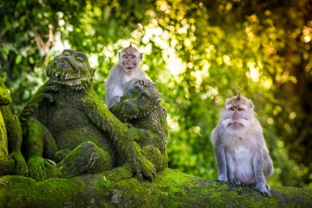 bosque monos